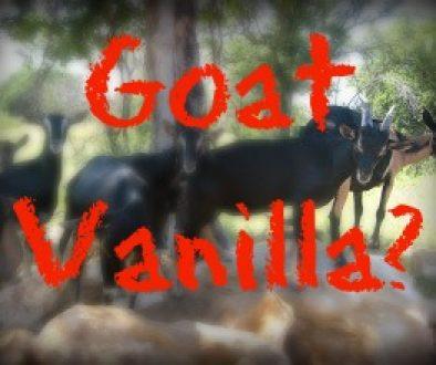 Goat Vanilla?