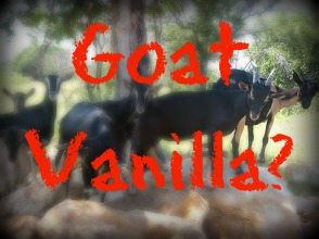 Goat kids and people kids make for lots of fun...