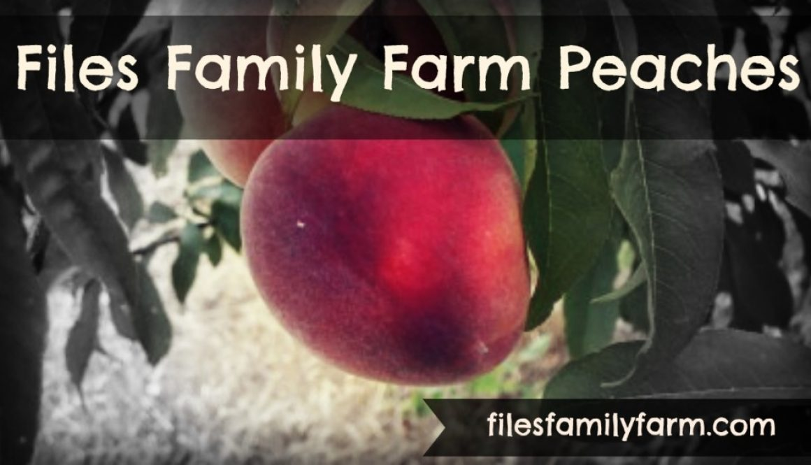 Files Family Farm Peaches